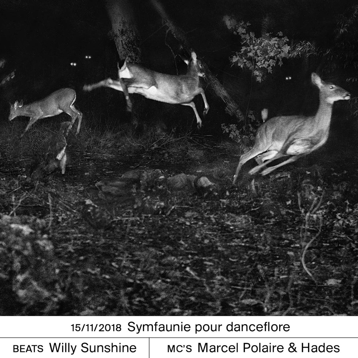 Symfaunie pour danceflore